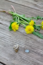 stock photo of garden snail  - Summer background with flowers and garden snail on a wooden table - JPG