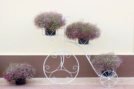 picture of stelles  - Gypsophila flower on bicycle stell frame with house wall - JPG