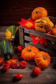 picture of traditional  - Traditional pumpkins for Thanksgiving and Halloween - JPG