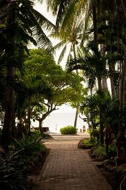 picture of garden eden  - A tropical garden with palm trees overlooking the sea with blue sky - JPG