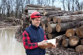 image of lumber  - Young lumber engineer standing with notebook in front of cut trunk stock - JPG