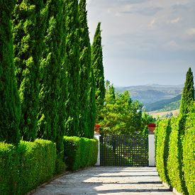 picture of farmhouse  - Cypress Alley Leading to the Farmhouse in Tuscany  - JPG