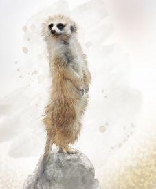 picture of meerkats  - Digital Painting of Meerkat on a Rock - JPG