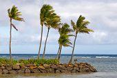 Palm Trees Ocean
