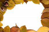 Herbst-Frame