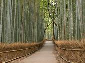 Bosque de bambú de Kyoto