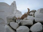 Mykonos Kitty