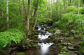 Smokies Creek