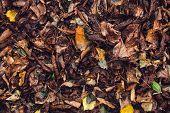 Dry, Fallen Leaves. poster