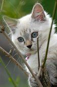 Cute Kitten In A Tree poster