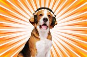 Beagle dog wearing headphones over abstract background.