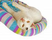 Tomcat branco em sua cama de gato