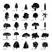 Tree Types Icons Set. Simple Illustration Of 25 Tree Types Icons For Web poster