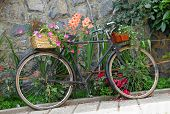 Old Bicycle Decorated With Flowers