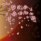 Background With Sakura Blossom - Japanese Cherry Tree