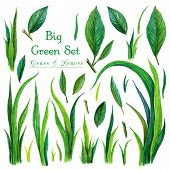 Big Set Of Watercolor Green Grass And Leaves. Watercolor Fresh Green Grass And Leaves Isolated On Wh poster
