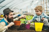 Agricultural Activity. Agricultural Activity Of Father And Son In Greenhouse. Agricultural Activity  poster