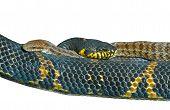 Twee slangen