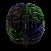Coloured areas of the Brain, back view