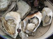 penn cove oysters from puget sound
