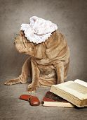 Chinese Sharpei Dog Reads The Book