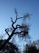 Tree And Sky 4