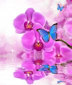 Beautiful purple orchid with butterflies Morpho reflection on water level
