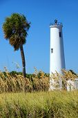 Lighthouse And A Palm Tree On A Tropical Island Near Tampa Florida