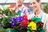 Florists or gardeners in flower shop, greenhouse or nursery