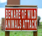 A sign warning of wild animal attacks in the jungle