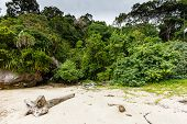 Tropical sandy beach surrounded by rainforest