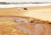 Dogs Exploring Beach