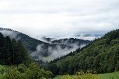 Fog in the morning in the Black Forest
