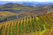 View of autumnal vineyards on the hills of Langhe in Piedmont, Northern Italy.