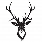 stock photo of deer head  - Vector ullustration of Deer head isolated - JPG