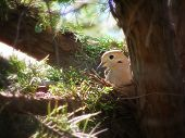 a cute mourning dove in a nest in a tree