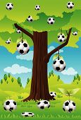 The soccer