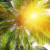 sunlight through the leaves of palm trees