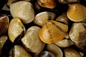 Raw Clams Background