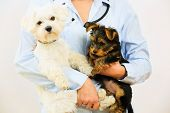 image of veterinary  - Veterinary treatment  - JPG