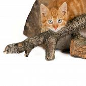 Cat on firewood