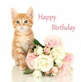 Birthday postcard. Cute little red kitten with roses isolated on white