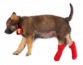 Sleeping puppy in red socks isolated on white