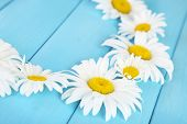 Chamomile wreath on blue wooden background