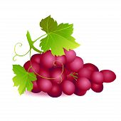 Icon Of Ripe Summer Grape With Two Green Leaves