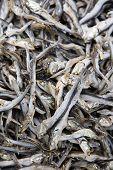 Dried Sardines background