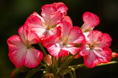 foto of transpiration  - Delicate flower - JPG