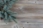 Blue Spruce Tree Branch On Rustic Wood