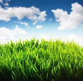 Green grass and blue sky scene background. Fresh rich growing green grass with the blue cloudy sky l