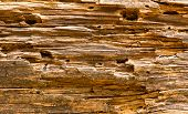 Old wooden texture, brown colors